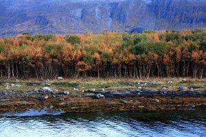 Herbst in der Kommune Alstahaug