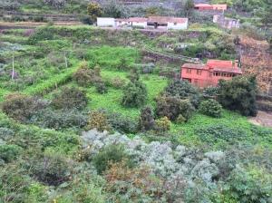 Kapuzinerkresse (in der Mitte) im Tal
